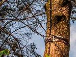 Укрепляем старое дерево