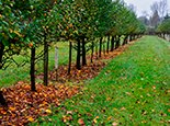 Сад ранней осенью