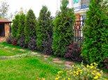 Сочетание зеленых и темно-красных растений