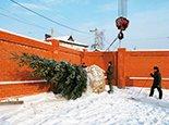 Озеленение участка зимой
