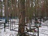 Большое дерево возле оградки