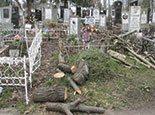 Остатки дерева