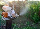 Избавляемся от насекомых