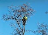 Кронируем дерево