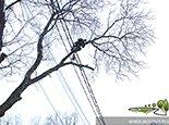 Работаем с верхушкой дерева