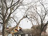 Убираем ветку над домом