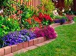 Різнокольорові квіти в саду