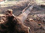 Удалили растения практически с корнем