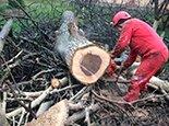 Распиливаем на дрова