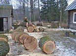 Порезали ствол на кругляки для дров