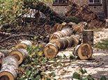 Будущие дрова