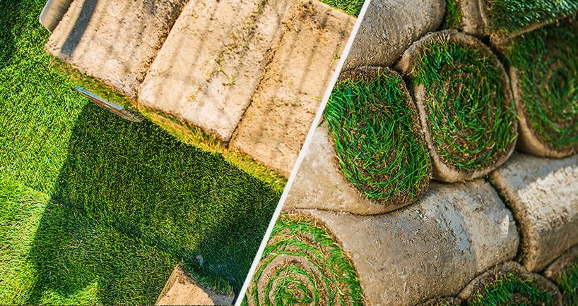 Этапы укладки рулонного газона